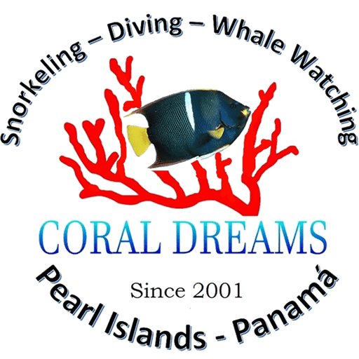 logo-coral-dreams